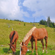 Horses on a hillside. — Stock Photo