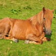 Horse on rest. — Stock Photo #3673683