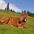 Stock Photo: Horse on rest.