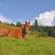 Foto Stock: Horse on rest.