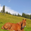 Horse on rest. — Stock Photo #3673695