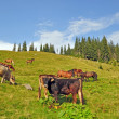Cows and horses on a hillside. — Stock Photo