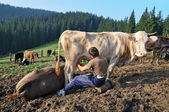 Morning milking on a mountain pasture. — Stock Photo