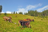 коров и лошадей на склоне. — Стоковое фото