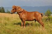 лошадь на склоне — Стоковое фото