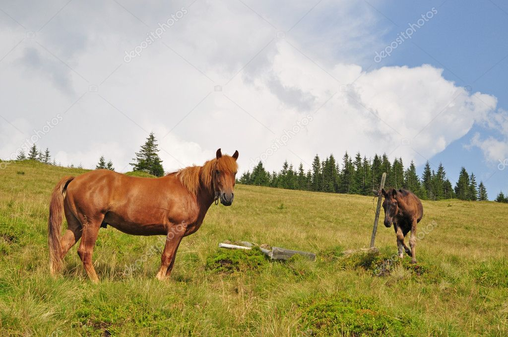 Horses on a hillside in a summer landscape under the dark blue sky. — Stock Photo #3673541