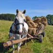 Horse with a cart loaded hay bales. - Stock Photo