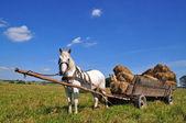 Cheval avec un chariot chargé des balles de foin. — Photo