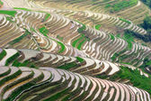 Rice terrases — Stock Photo
