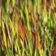 colorful grass background — Stock Photo