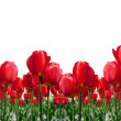 RedTulips Border — Stock Photo
