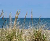 Hierba de la playa — Foto de Stock