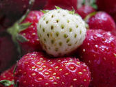 White Strawberry One — Stock Photo