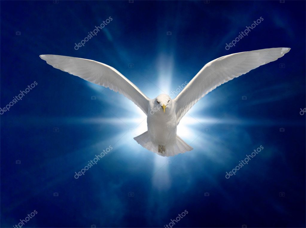 Holy Spirit Bird on Royal Blue Starburst Background — Stock Photo #2972864