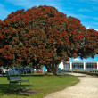 POHUTUKAWA TREE - Stock Photo