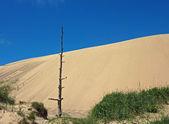 Dune — Stock Photo