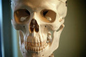 Close up of skull — Stock Photo
