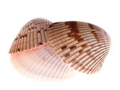 Cockle shell stack — Stock Photo