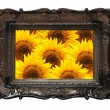 Flowers and image frame on wall - Stock Photo