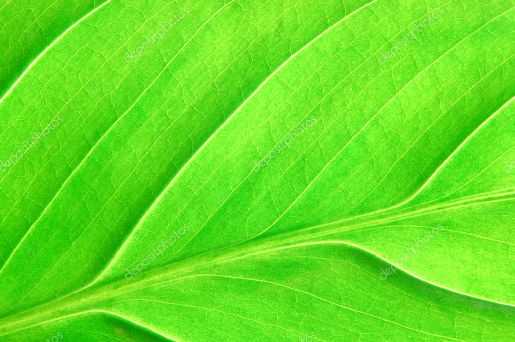 Texture or structure of a green leaf — Stock Photo #2990043
