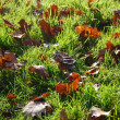 Grass texture with leaves in autumn — Stock Photo
