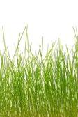 Grass — Zdjęcie stockowe