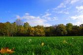 紅葉の森国連 der の青い空 — ストック写真