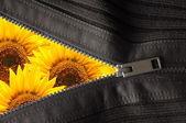 Ukryte kwiat — Zdjęcie stockowe