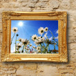 Flowers and image frame on wall — Stock Photo #3043362
