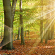 Sun tree and woods — Stock Photo