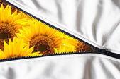 Summer flower — Stock Photo