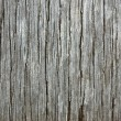 Wood texture — Stock Photo #3086028