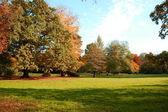 Podzim v parku se zelenými stromy pod modrou oblohou — Stock fotografie