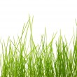 Grass — Stock Photo #3305706
