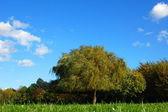 Skog och trädgård under blå himmel på hösten — Stockfoto