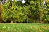 Caen en el parque con árboles verdes bajo cielo azul — Foto de Stock