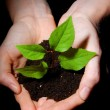 Hands soil and plant showing growth - Stock Photo
