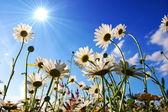 Flores desde abajo — Foto de Stock