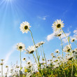 Flower in summer under blue sky - Stock Photo