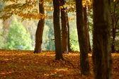Les a zahrada s spadaného listí na podzim — Stock fotografie