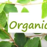 Organic — Stock Photo #3441164