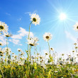 Flower in summer under blue sky - Foto Stock