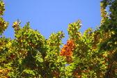 Floresta e jardim com folhas douradas no outono — Fotografia Stock