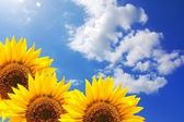 Summer sun and copyspace — Stock Photo