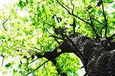 Alberi nei boschi — Foto Stock