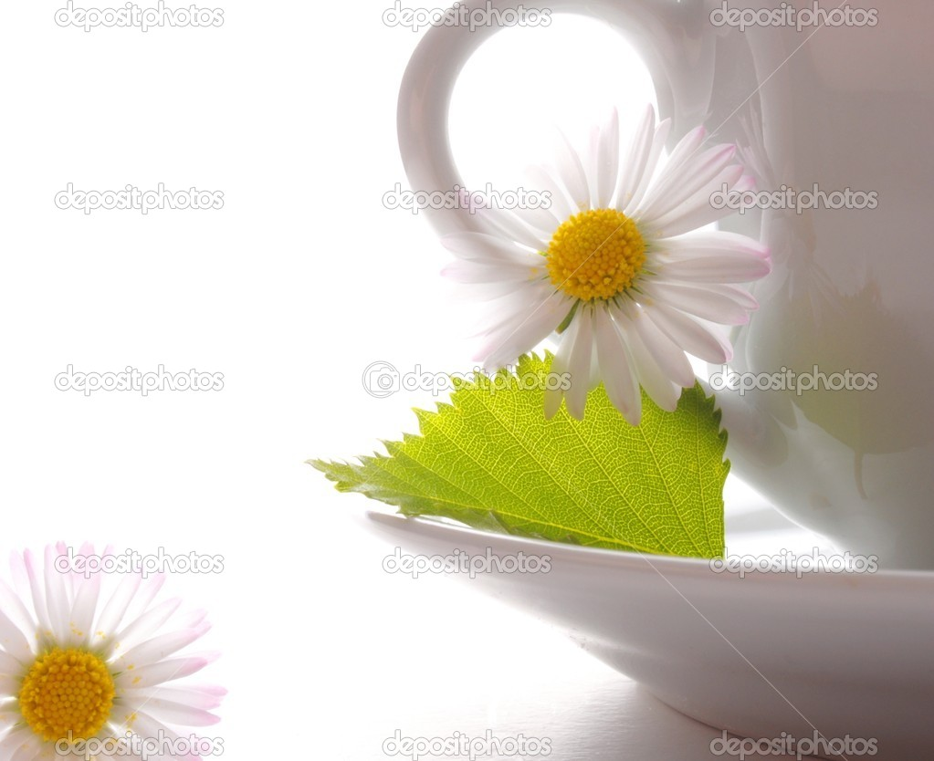 Cup of tea or coffee with leaf and white copyspace  — Stock Photo #3440494