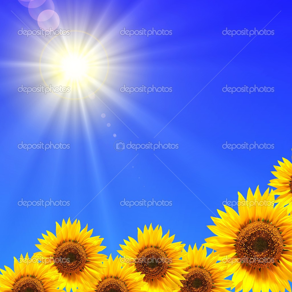 Sunflower and blue sky showing summer concepty  Stock Photo #3485431