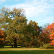 Fall in the park with green trees under blue sky — Stock Photo #3565392