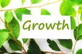 Growth — Zdjęcie stockowe