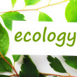 ecology — Stock Photo